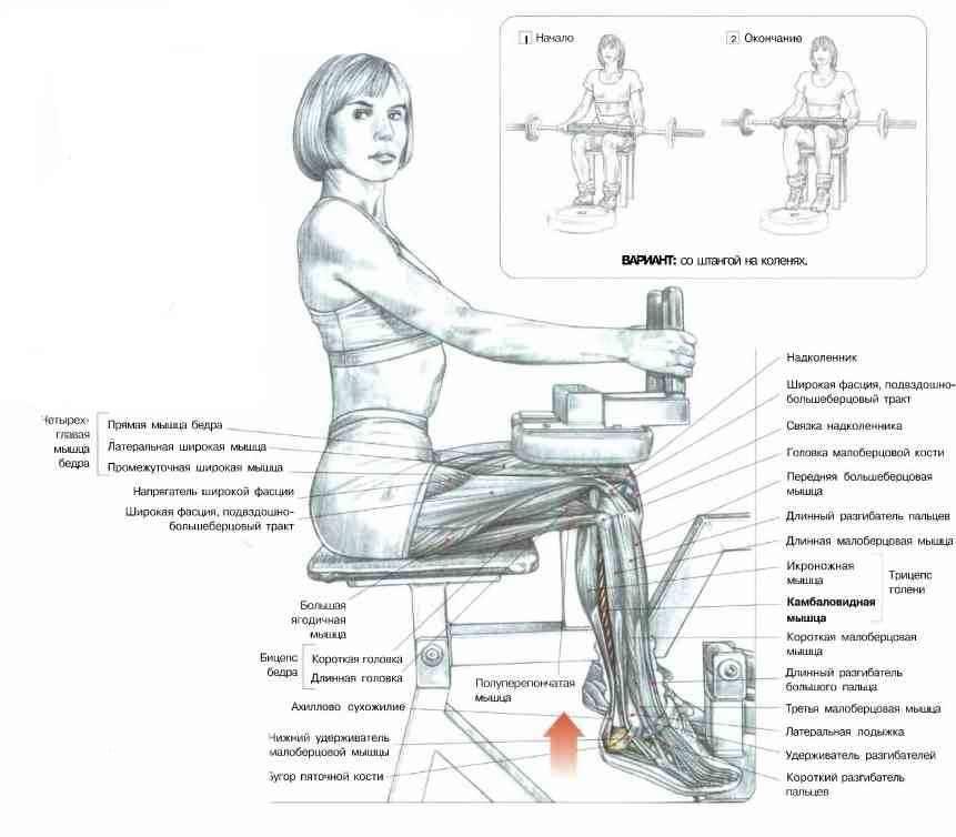 """Описание упражнения: подъёмы на носки стоя"""": правильная техника выполнения, ошибки, разновидности"""