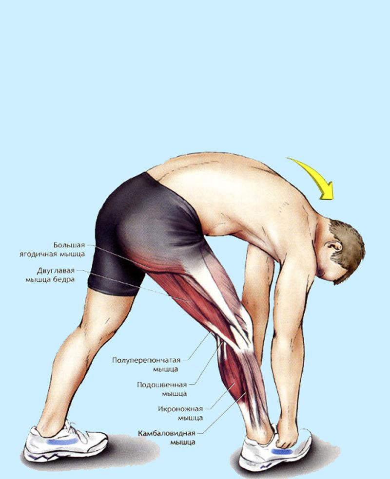 Растяжение мышц и связок шеи: симптомы, методы лечения, частые ошибки и меры профилактики.