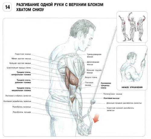 Сгибание рук на бицепс в нижнем блоке кроссовера: техника с прямой, ez и канатной рукоятью