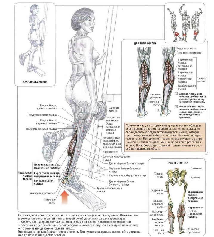 Как накачать икры – 6 принципов роста мышц голени