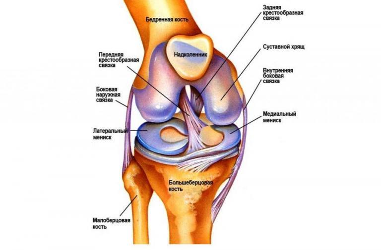 Как сберечь и укрепить колени? упражнения и питание для связок коленных суставов