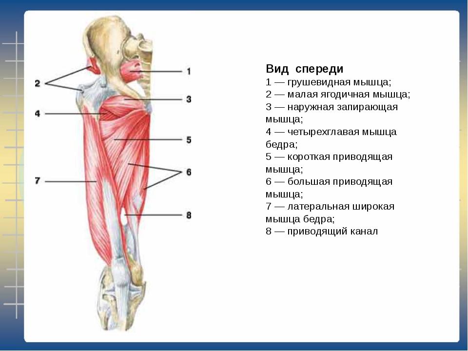 Большая и малая круглые мышцы спины: функции и лучшие упражнения