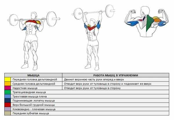 Толчок штанги (clean and jerk): техника выполнения, какие мышцы работают, польза и нормативы
