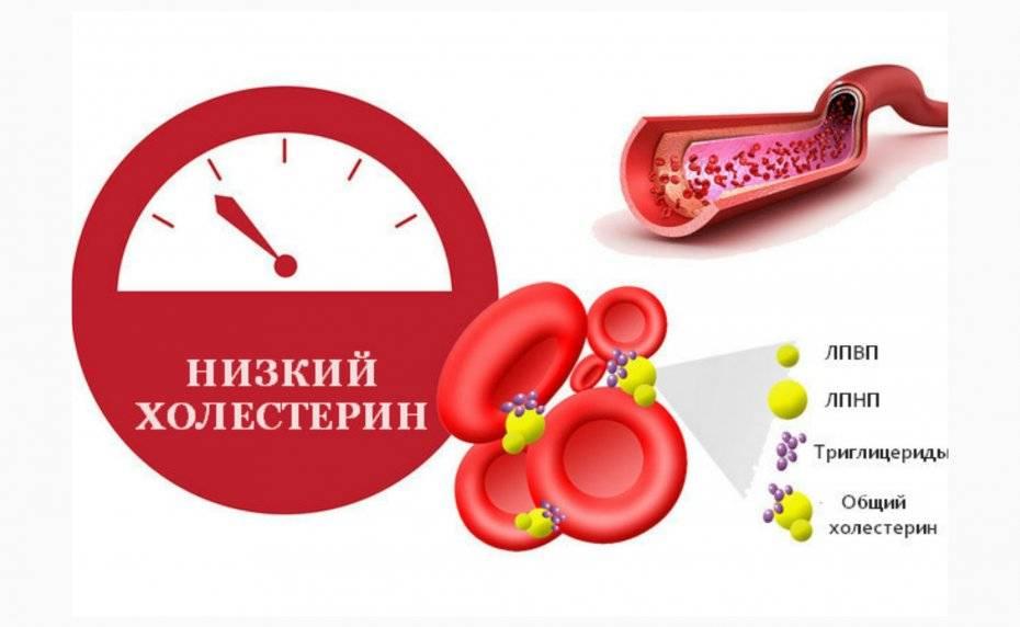 Как снизить уровень холестерина в крови в домашних условиях