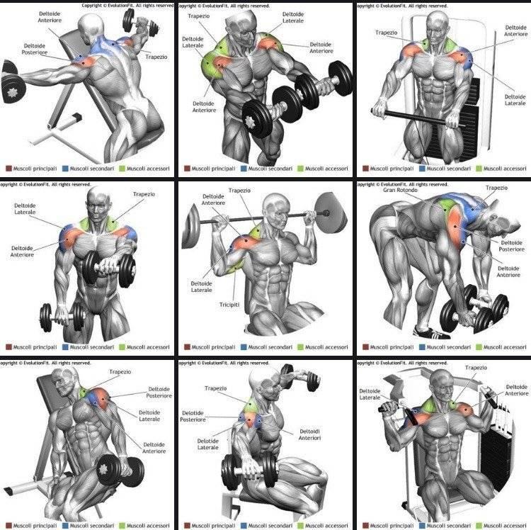 5 лучших упражнений на дельты