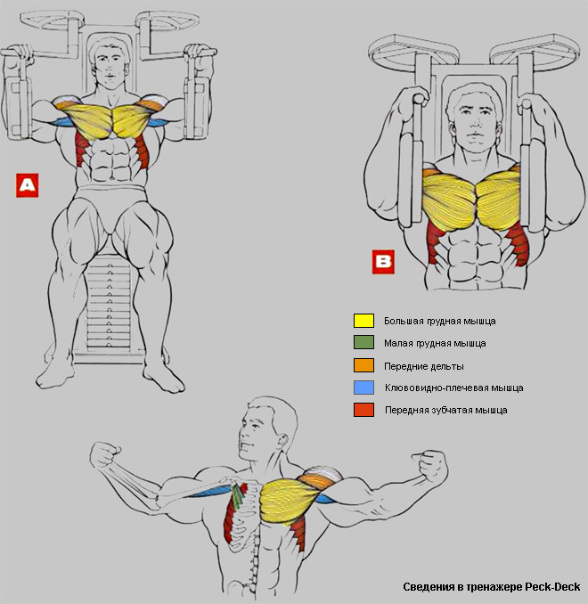 Как накачать внутреннюю часть грудных мышц: эффективная программа