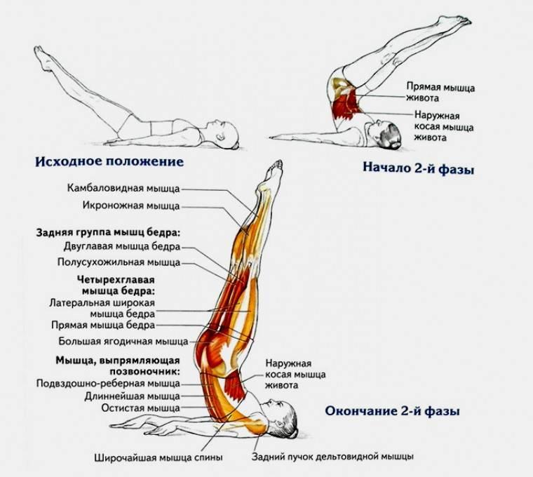 """""""велосипед"""" лежа на спине: польза упражнения, какие мышцы работают, как правильно делать"""