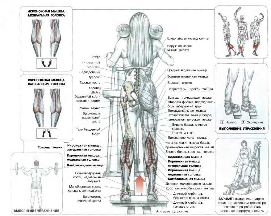Подъем на носки: разработка икроножных мышц. топ-30 самых эффективных тренировок для мужчин и женщин! изучаем все тонкости и секреты