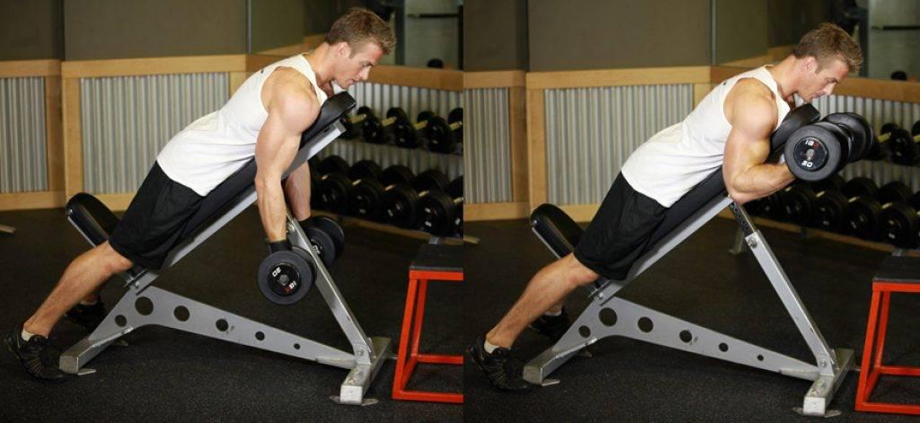 Бицепс - упражнения и особенности тренировки. - мир бодибилдинга