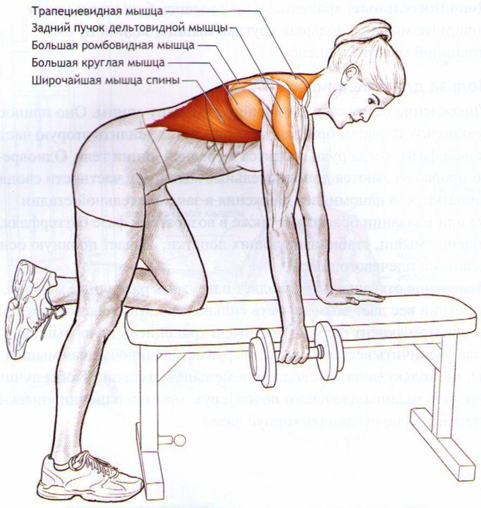 Тренировка спины в тренажерном зале: как правильно качать спину, лучшие упражнения для мышц спины