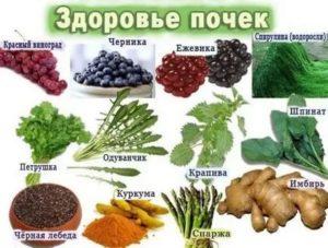"""9 продуктов, полезных для почек человека: что из еды """"любят"""" эти органы, а что вредно кушать и пить для их здоровья"""