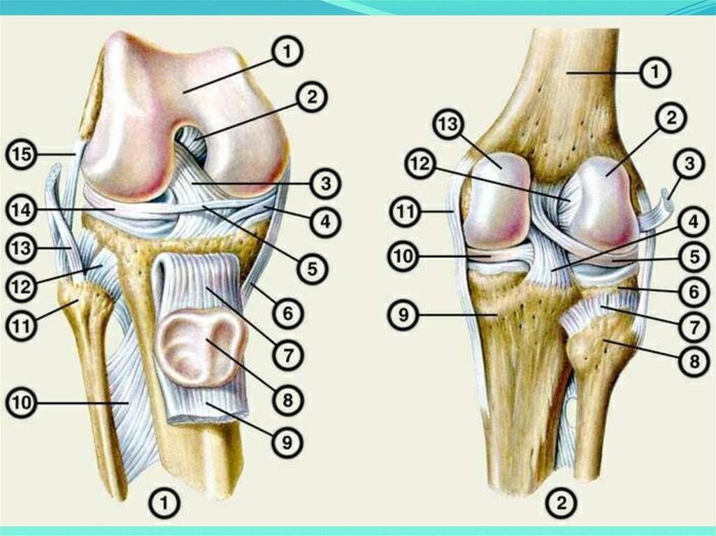 Как правильно растянуть мышцы под коленями в домашних условиях