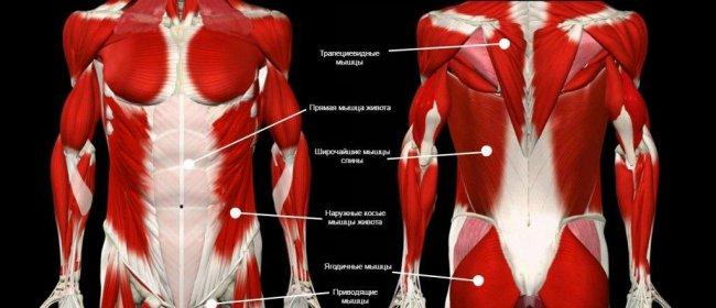 Зачем укреплять мышцы кора – o sporte