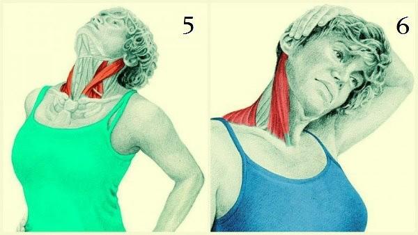 """Тренируем мышцу шеи, которая исправляет осанку и отвечает за """"вдовий"""