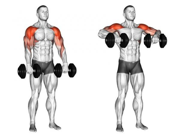 Тяга гантелей к подбородку: техника выполнения, какие мышцы работают