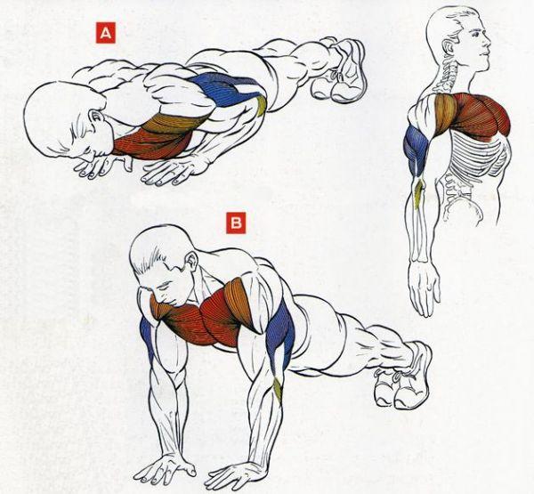 Как правильно накачать грудные мышцы отжиманиями?