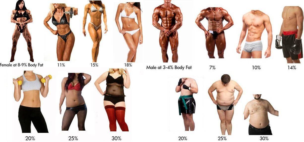 Все о проценте жира в организме – зожник  все о проценте жира в организме – зожник