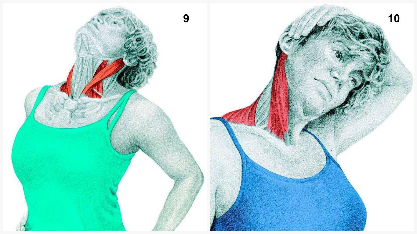 Боль в области головы и шеи. грудинно-ключично-сосцевидная мышца.
