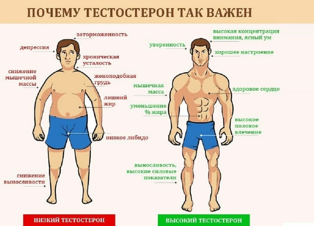 10 симптомов низкого тестостерона у мужчин | promusculus.ru