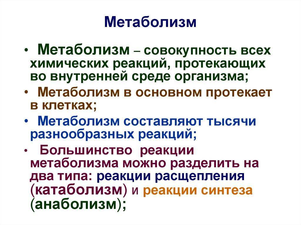 Что такое обмен веществ в организме человека. обмен веществ в организме | здоровье человека