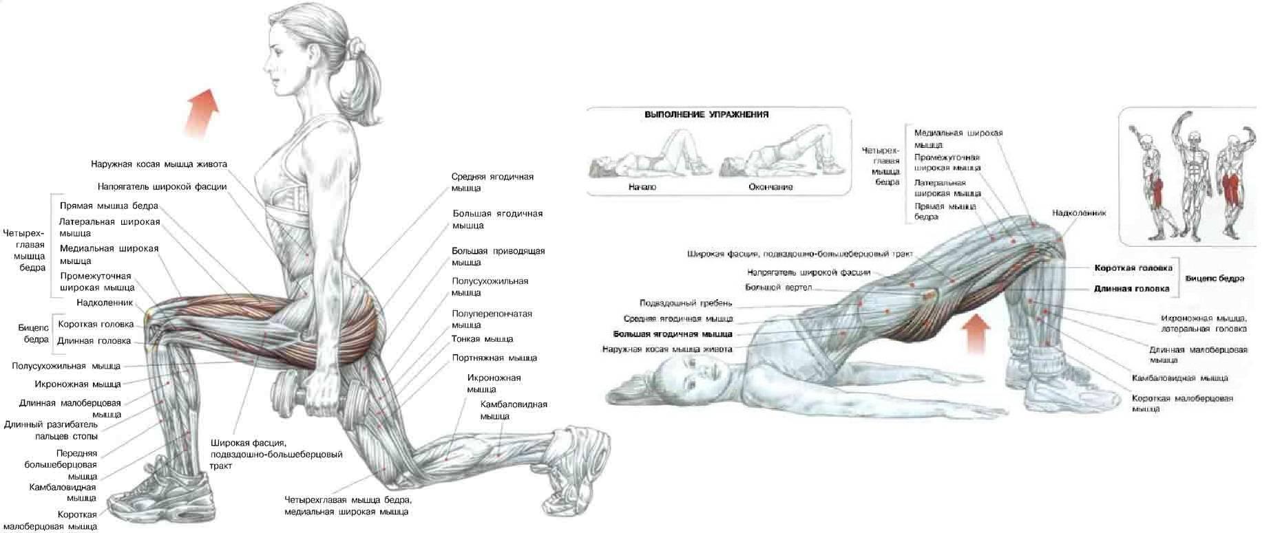 Пампинг, короткая/усеченная аплитуда упражения, работа внутри амплитуды, максимальная/полная амплитуда, мышечный насос