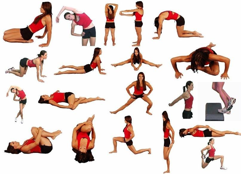 Упражнения на растяжку для начинающих: простая гимнастика на растягивание мышц, комплекс движений на все части тела, разминка перед тренировкой