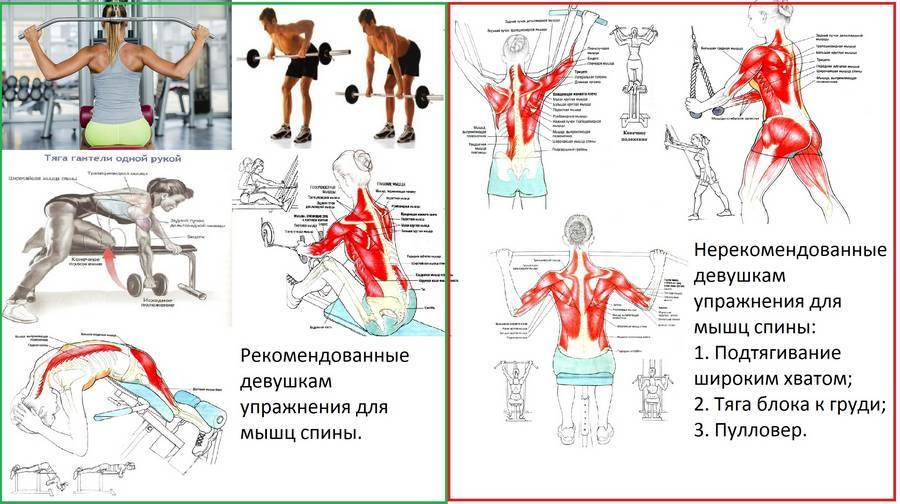 Спортзал не нужен: 5 отличных упражнений для укрепления мышц спины в домашних условиях