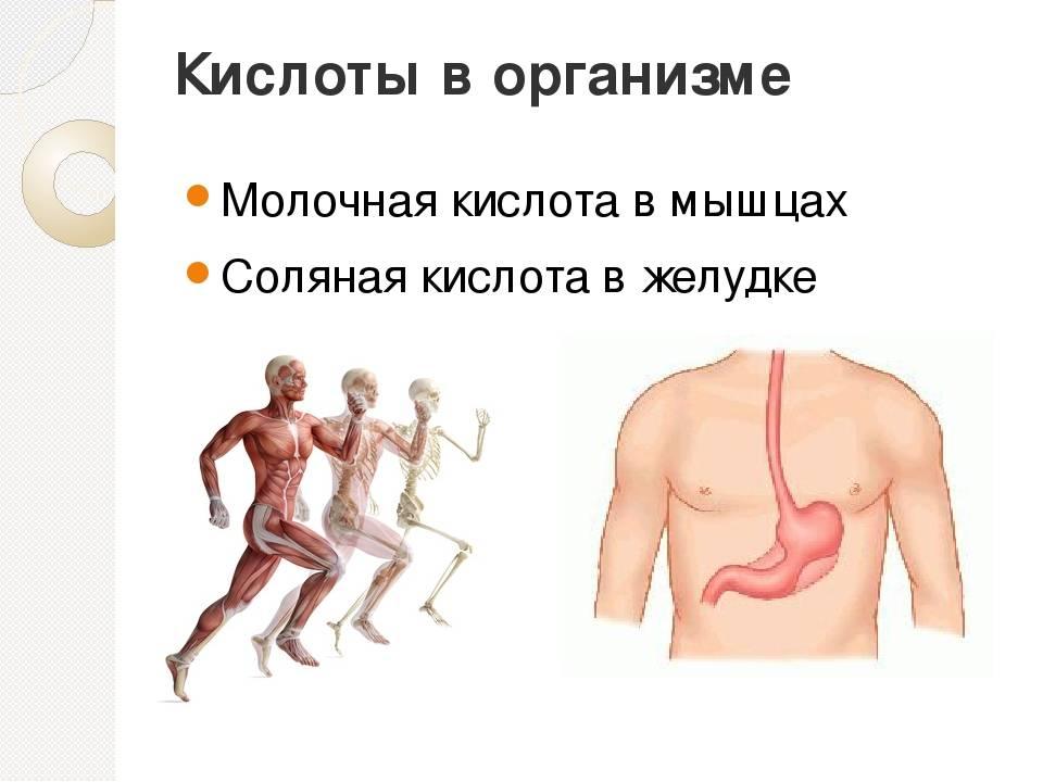Как вывести молочную кислоту из мышц организма — что делать, чтобы уменьшить боль