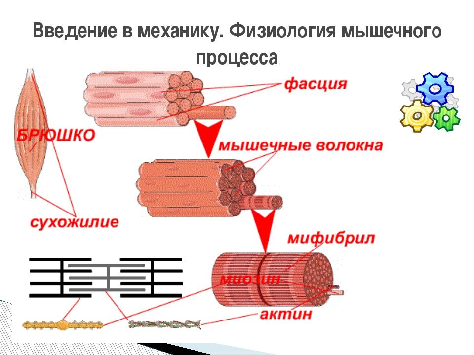Подполье 79. теории роста мышц (почему мышцы растут)