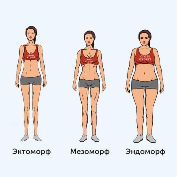 Как узнать свой соматотип: эктоморф, мезоморф или эндоморф