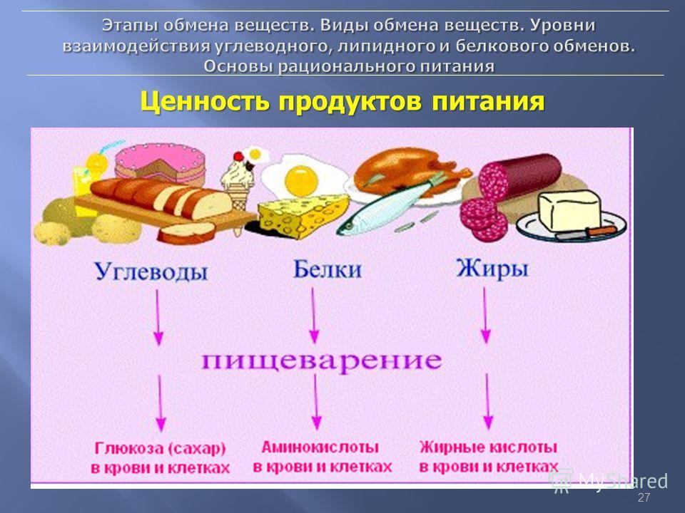Что такое обмен веществ в организме человека. обмен веществ в организме