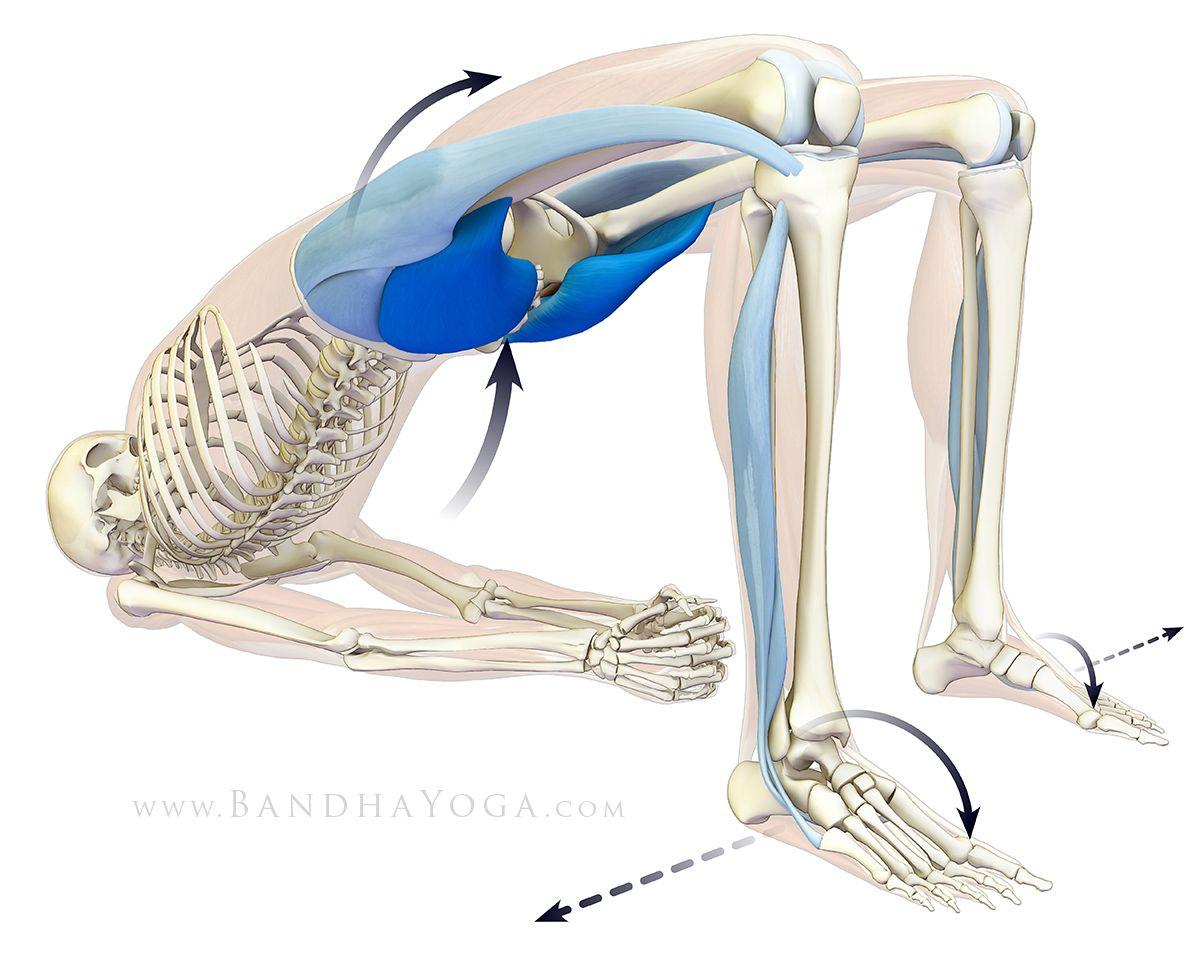 Упражнения для подвздошно- поясничной мышцы: для укрепления, растяжки, снятия мышечных зажимов, расслабления и вытягивания