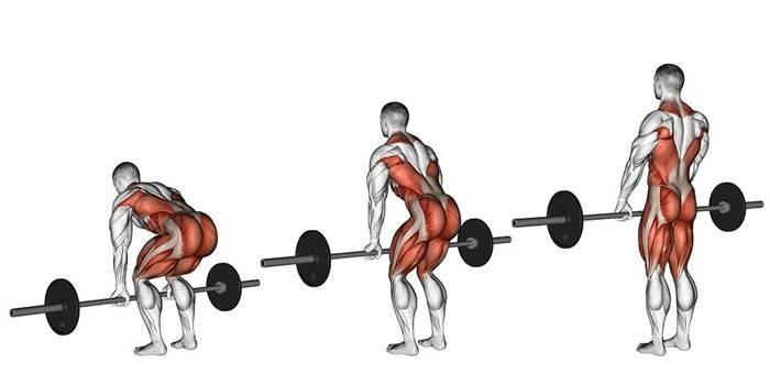 Приседания и становая тяга: о мышцах и их работе | lastmanstanding