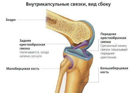 Как укрепить суставы: плечевой, коленный, тазобедренный