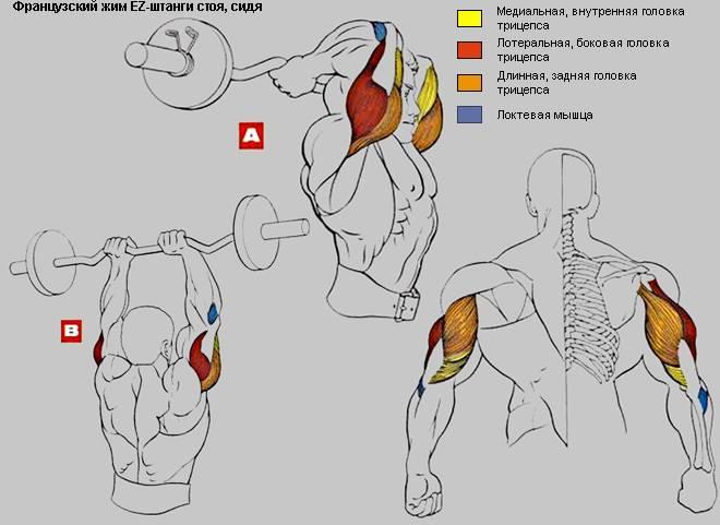 Французский жим штанги лежа: техника, какие мышцы работают и чем заменить