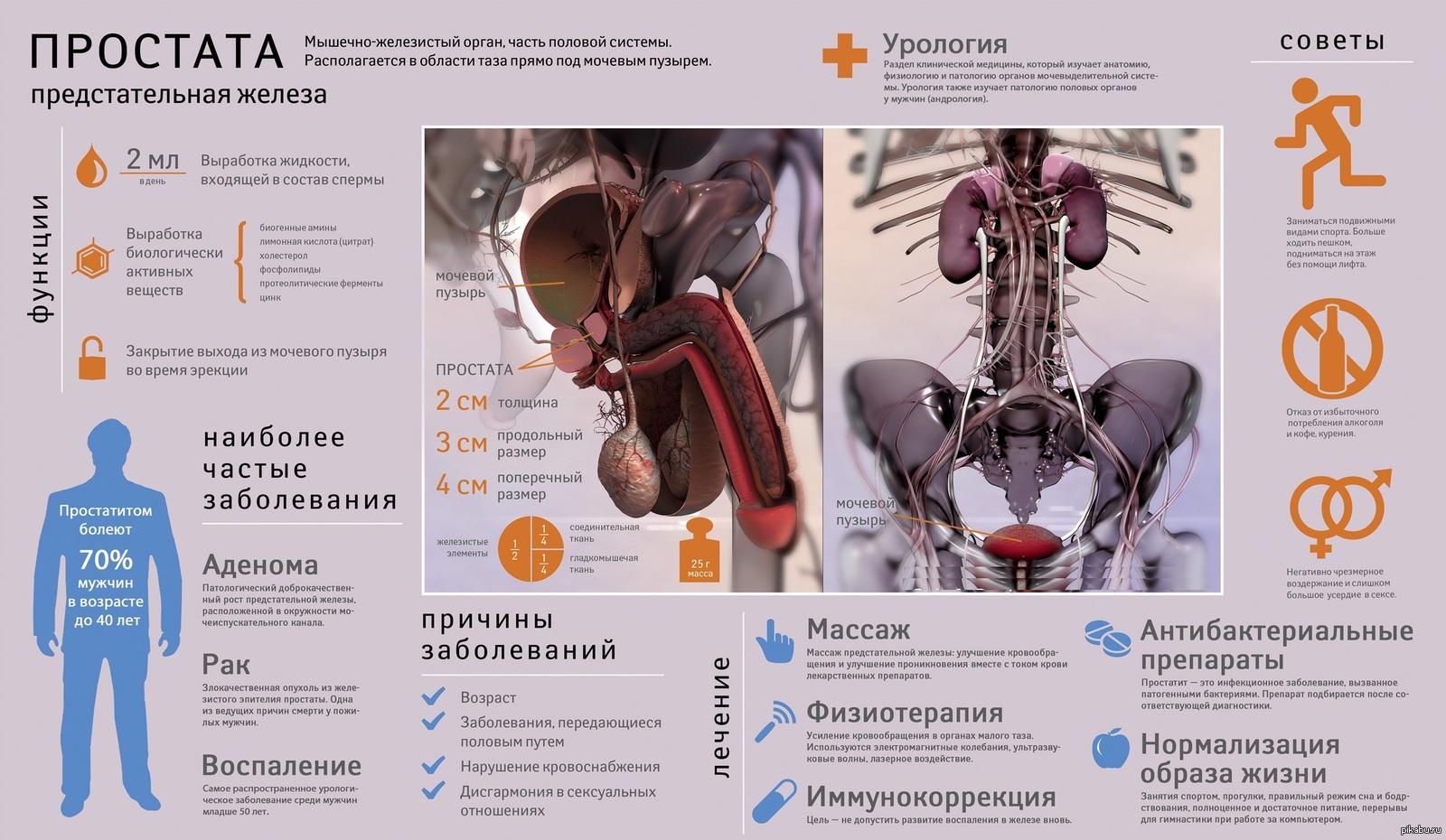 Причины аденомы простаты у мужчин: что способствует возникновению ипровоцирует рост, как избежатьпоявления? | prostatitaid.ru