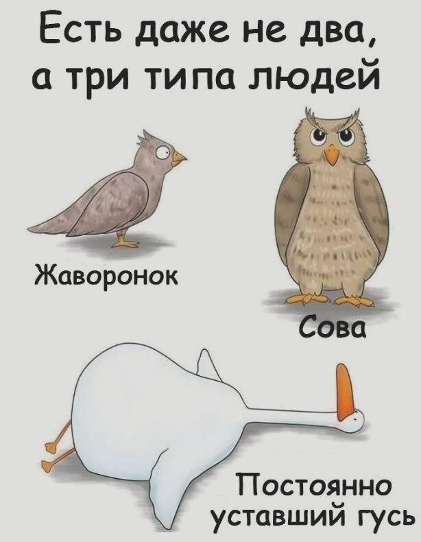 """Как стать """"совой"""" (с иллюстрациями) - wikihow"""
