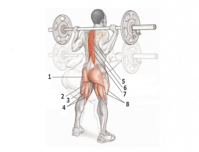 Подъемы штанги на грудь: техника выполнения базового упражнения, рекомендации и советы по применению подъемов штанги на грудь