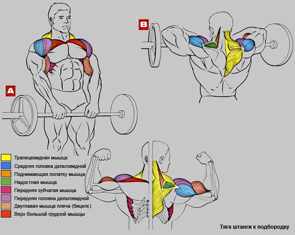 Тяга штанги к подбородку широким и узким хватом: тренинг в разных вариантах и техниках | rulebody.ru — правила тела