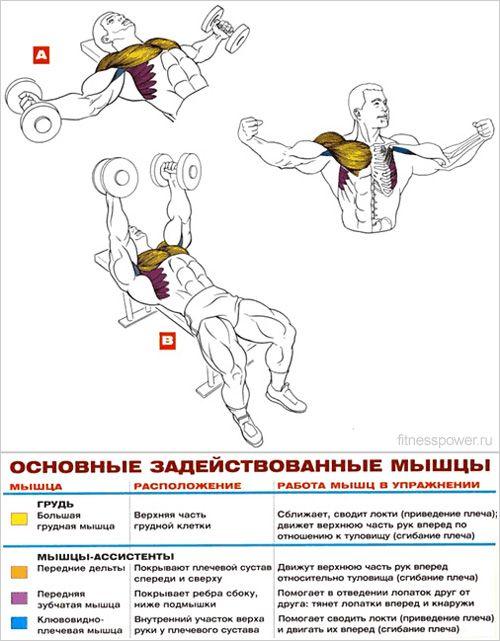 Выполняйте только лучшие упражнения для мышц рук!