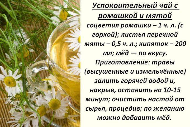 Ромашковый чай - польза и вред для женщин, воздействие на организм, противопоказания