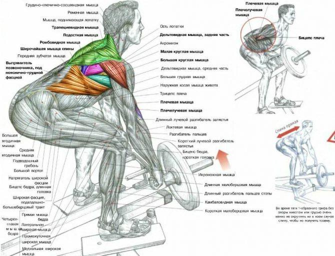 Как накачать крылья самые эффективные упражнения для мышц спины