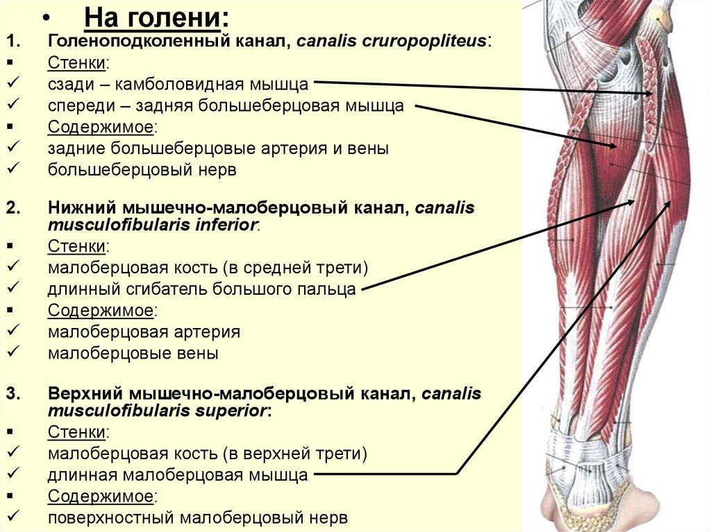Упражнения по группам мышц