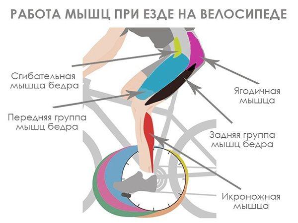 Как делать упражнение велосипед правильно?