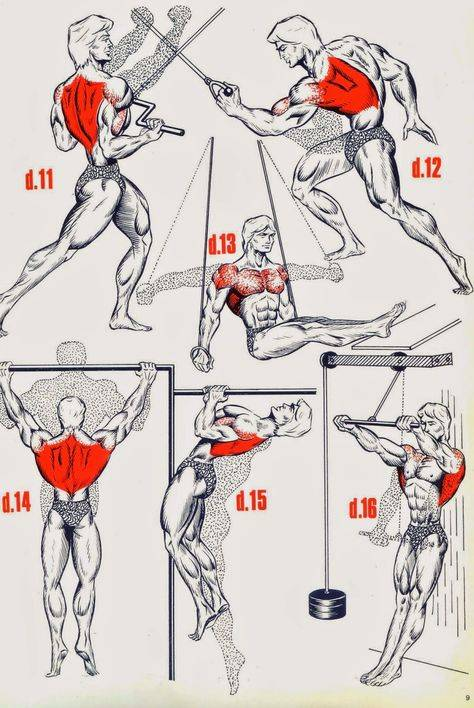 Как накачать крылья мужчине. упражнения для крыльев и большой спины - «themensfit»