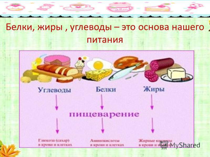 Что такое система питания человека: правила, методики