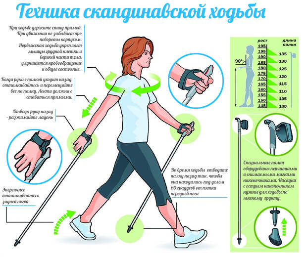 Похудение с помощью скандинавской ходьбы - техника, польза и сколько калорий сжигается за час