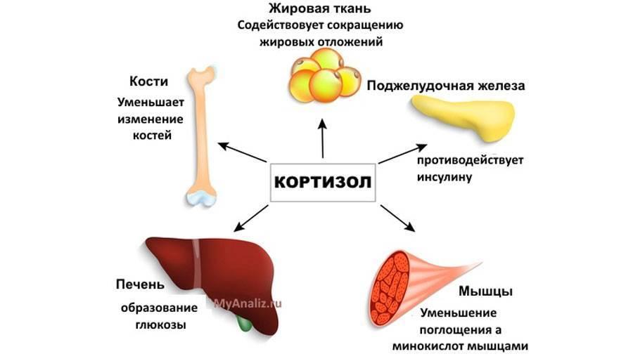 Анаболизм: как добиться роста мышц тренировками и питанием