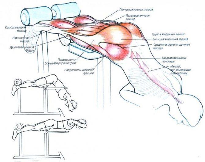 Обратная гиперэкстензия - техника выполнения, какие мышцы работают?