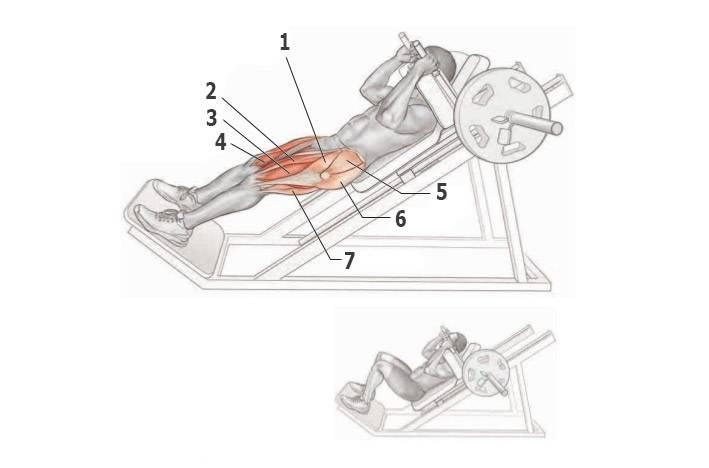 Гакк-приседания — техника выполнения